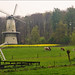 Dutch Windmills in Spring