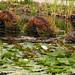 Oregon Garden Nessie IMG_3495