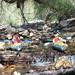 Kayaking in Sabino Canyon