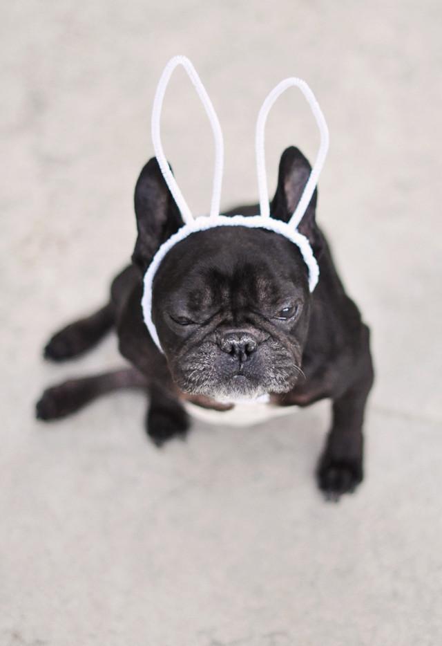 Happy Easter Dog Easter Dog French Bulldog