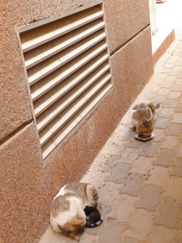 Cats Alwts Get Diahgrea Eating Wet Food