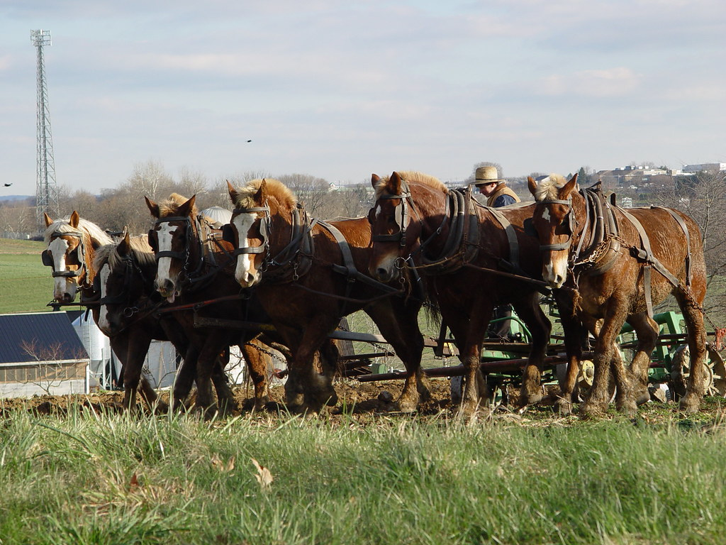 Lancaster, PA work horses
