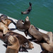 Summer with Sea Lions