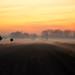 Foggy Morning Gravel Road