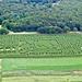 WNPR At Buttonwood Farms Corn Maze