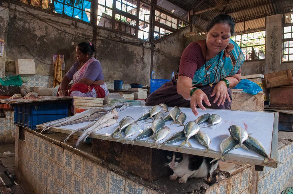 Fish retail wholesale market mumbai fish market india for Wholesale fish market