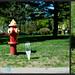 Urban Plant Tag: Fire Hydrant