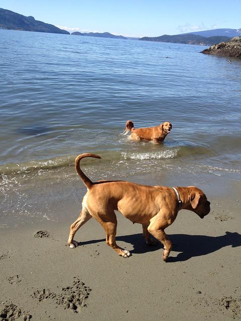 Pet Walking Nature Trail In Shoreline Park Gulf Breeze Fl