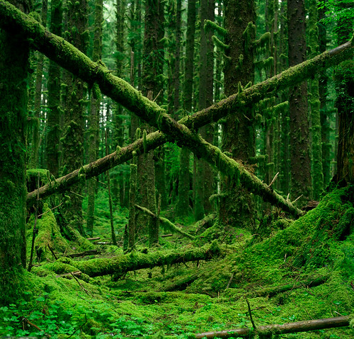 X marks the forest | by Zeb Andrews