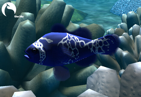 Go Back > Gallery For > Blue Clownfish