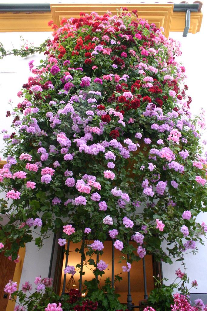 C rdoba reja concurso popular de rejas y balcones for Balcones decorados con plantas