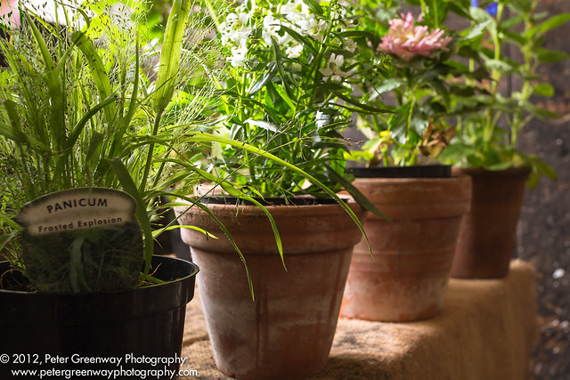 Pot Plants For Sale At Chastleton House Flickr Photo