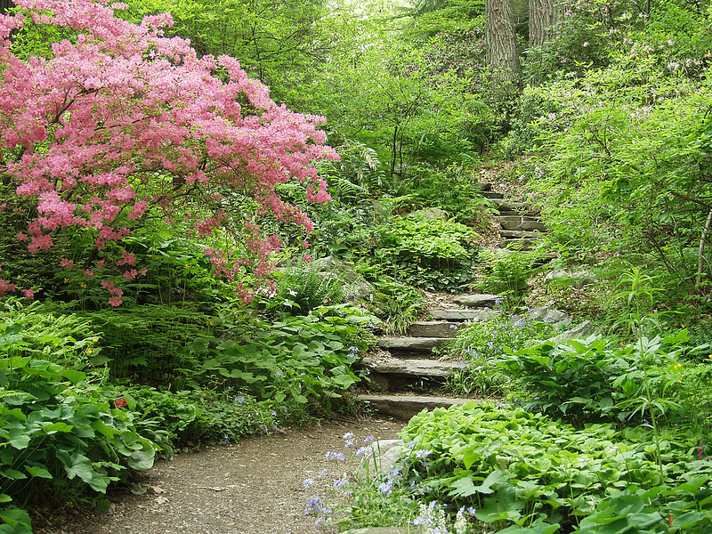 Metro West Garden In The Woods Framingham Credit Lisa Flickr