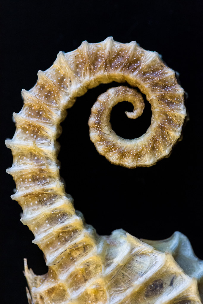 Image Result For A Horse Tail