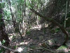 Redescente du Velacu : une autoroute que ce vieux chemin de carbonare !