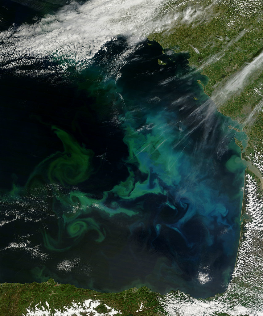 Phytoplankton Bloom In The Bay Of Biscay Phytoplankton
