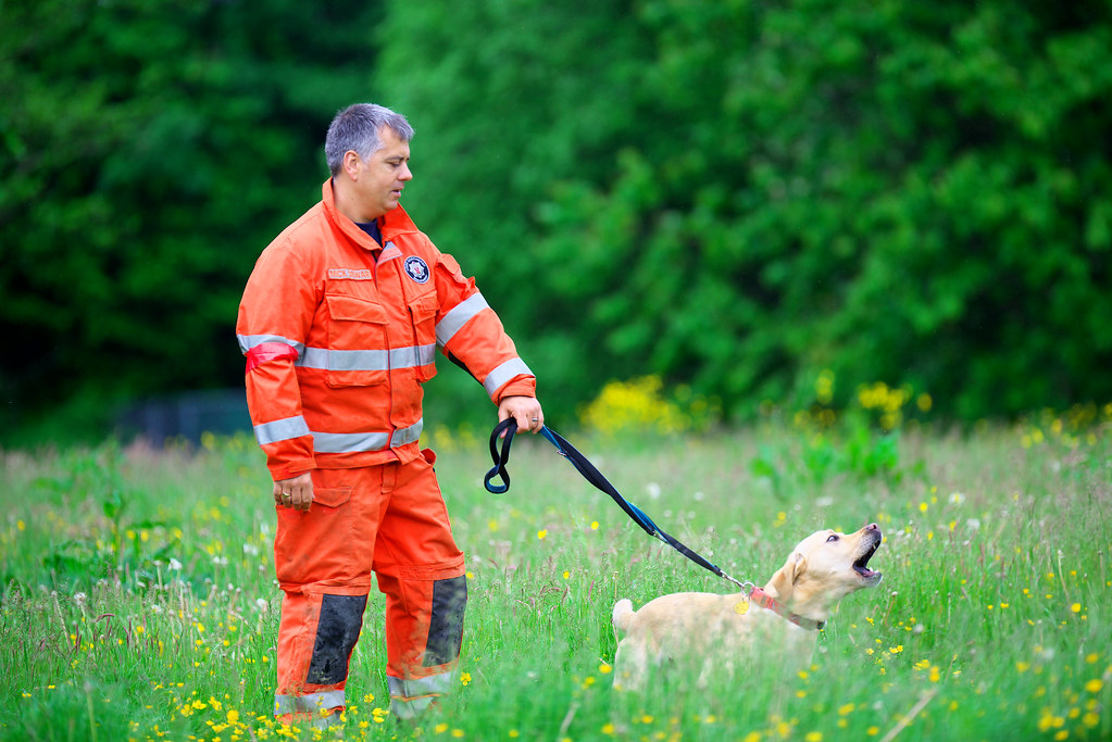 Search And Rescue Dog Training Videos