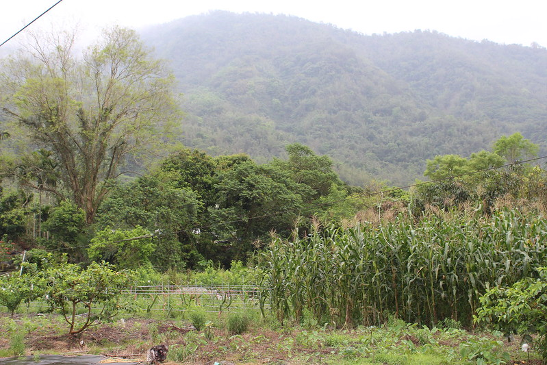台灣新林業將輔導私有地或租地造林戶基於維繫生物多樣性,置入友善環境的里山精神,不會發展為大規模林業。攝影:廖靜蕙