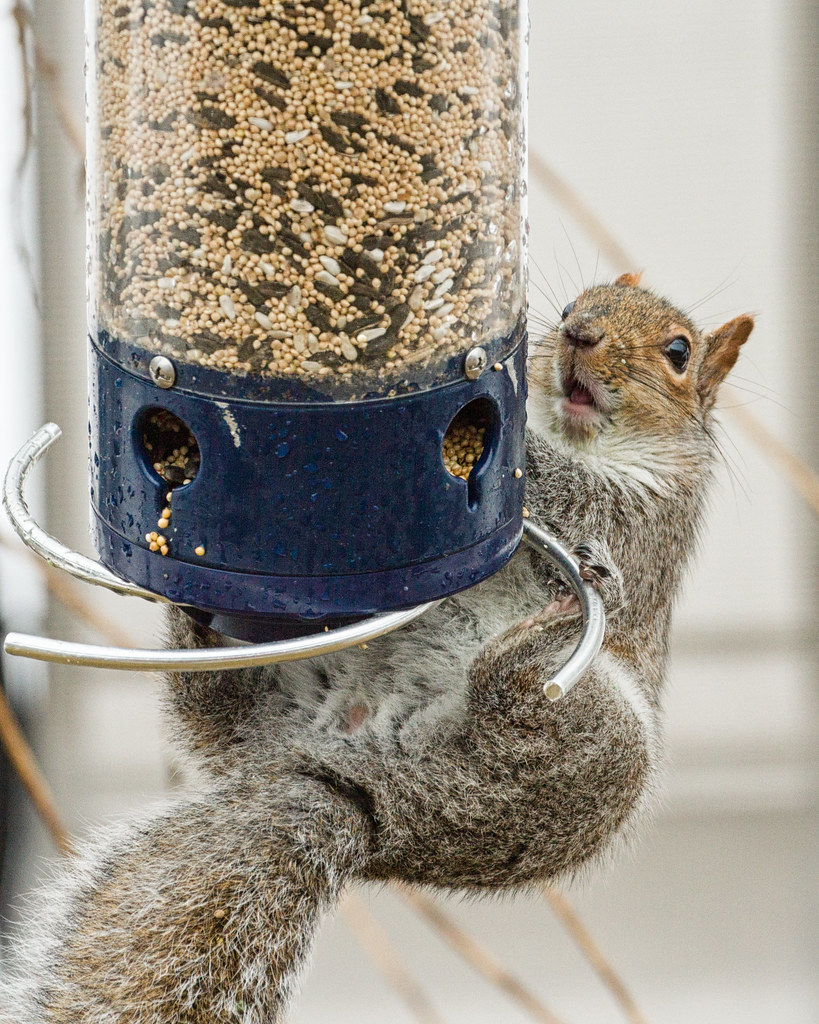 mynature bird the feeder coon feeders undrum apps img expensive