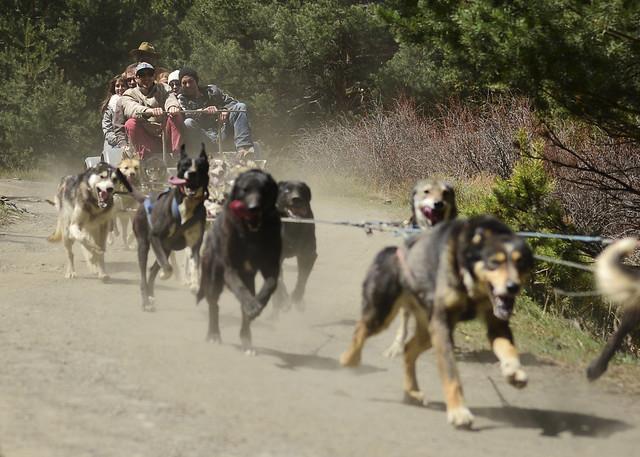 Momento épico con los perros de trineo por Granada y las pistas forestales del Parque Nacional de Sierra Nevada