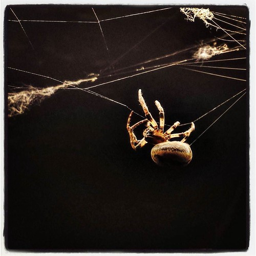 Phil ignored me. Thanks, Phil! #spiders