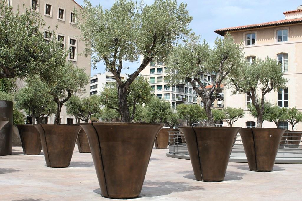 Marseille place jules verne jardin des oliviers en pot flickr - Arrosage olivier en pot ...