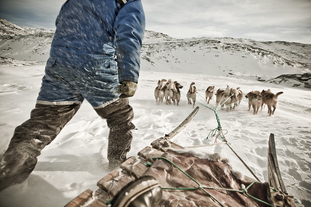 Dog sled driver and dogs