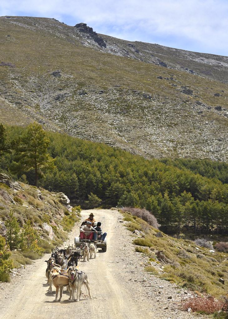 Ruta panorámica por Sierra Nevada en trineo de perros