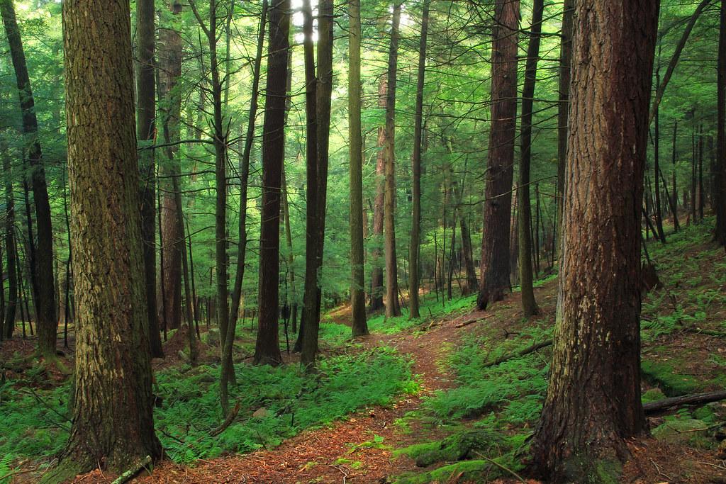 Forrest H Dutlinger Natural Area Revisit 4 Old