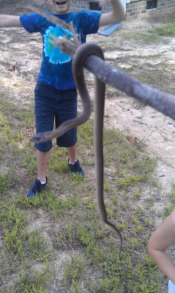 snake found in yard jesus rodriguez flickr