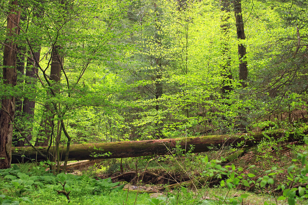 Undergrowth old growth forest columbia county within for Forest floor definition