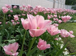 Снимок с Meizu M3