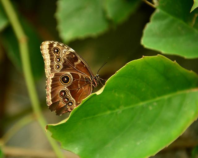 Mariposas del mariposario del Parque de las Ciencias de Granada