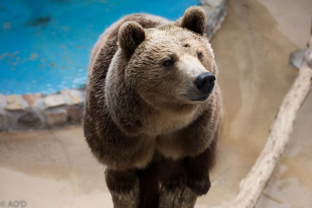 Georgia Bear 3  Flickr  Photo Sharing