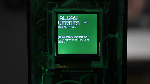 algas verdes v3