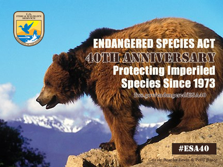 Endangered species act 40th anniversary usfws mountain for Us fish and wildlife service jobs