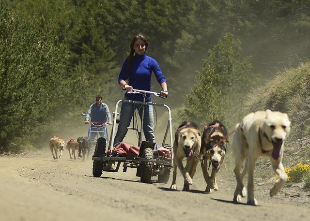 Ruta de perros de trineo por Sierra Nevada