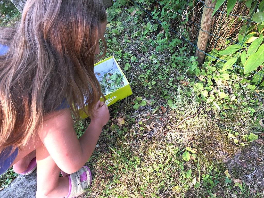 Vive la libert apr s les frayeurs la curiosit la for Combattre les moustiques dans le jardin
