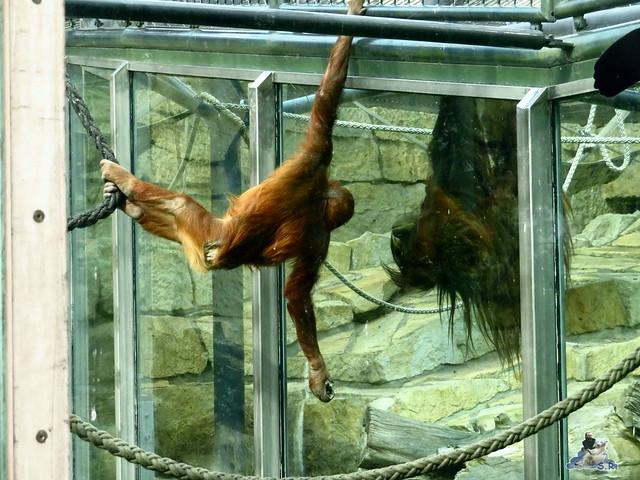 Zoo Berlin 27.05.2016   099