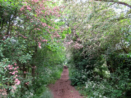 Garston to St Albans Hike