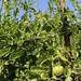 Your Farm News in Photos - Summer Scenes