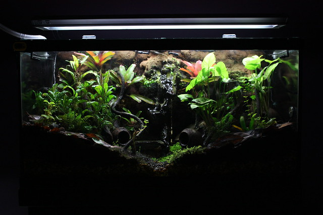 Dart Frog Vivarium - July 10, 2013 | Flickr - Photo Sharing! 10 Gallon Vivarium