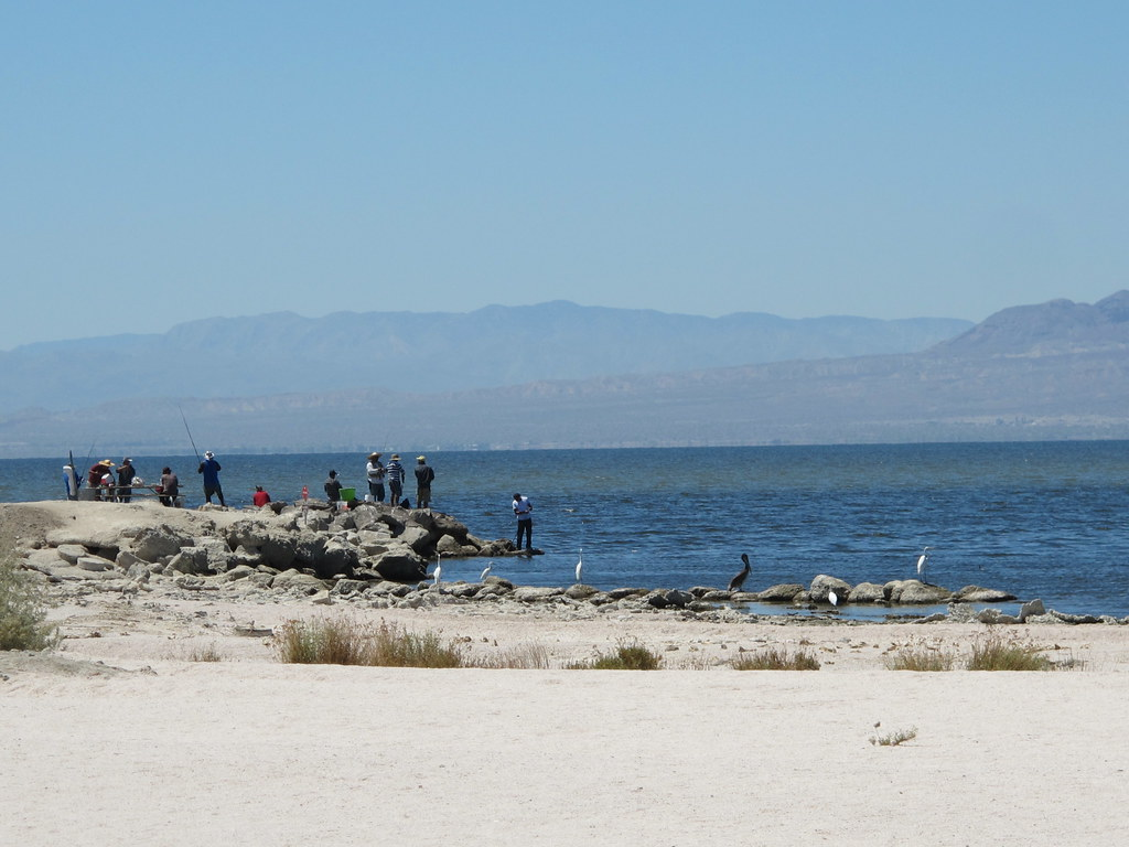 August 10 2013 23 the triad visited the salton sea for Salton sea fishing report