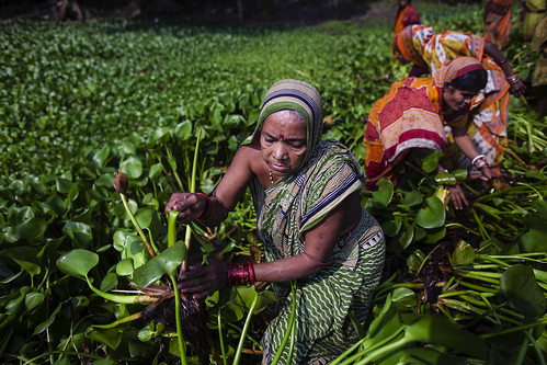 Women Adapting to Climate Change - Glimpses from Puri district, Odisha | by UNDP in India