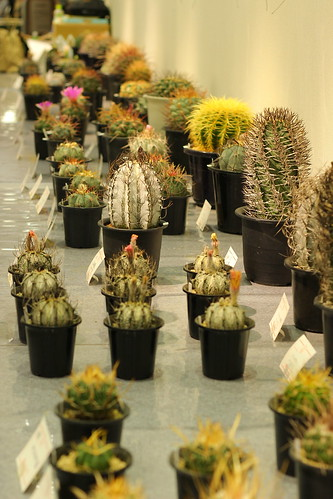 An exhibition of cacti & succulents