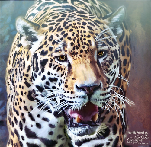 Image of the face of a Jaquar from the Jacksonville Zoo