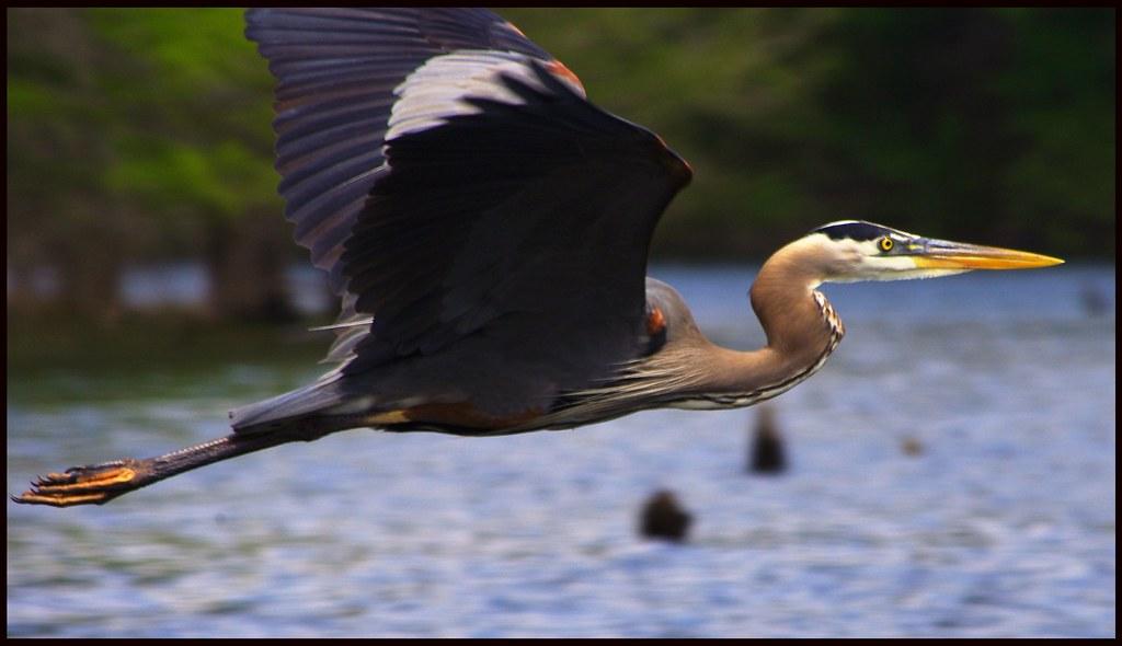 Blue Heron Glasboden Bootstour