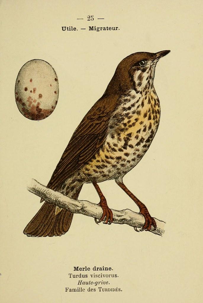 N60 w1150 atlas de poche des oiseaux de france suisse for Oiseaux de france