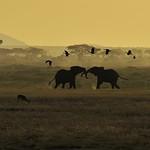 Ngorongoro_2012 05 30_2354