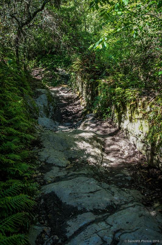 Camino de bajada a la Cascada de La Rierada